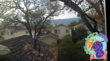 View out the Orange Room's window, 1 of this 2 bedroom guesthouse in Sonoma Valley.