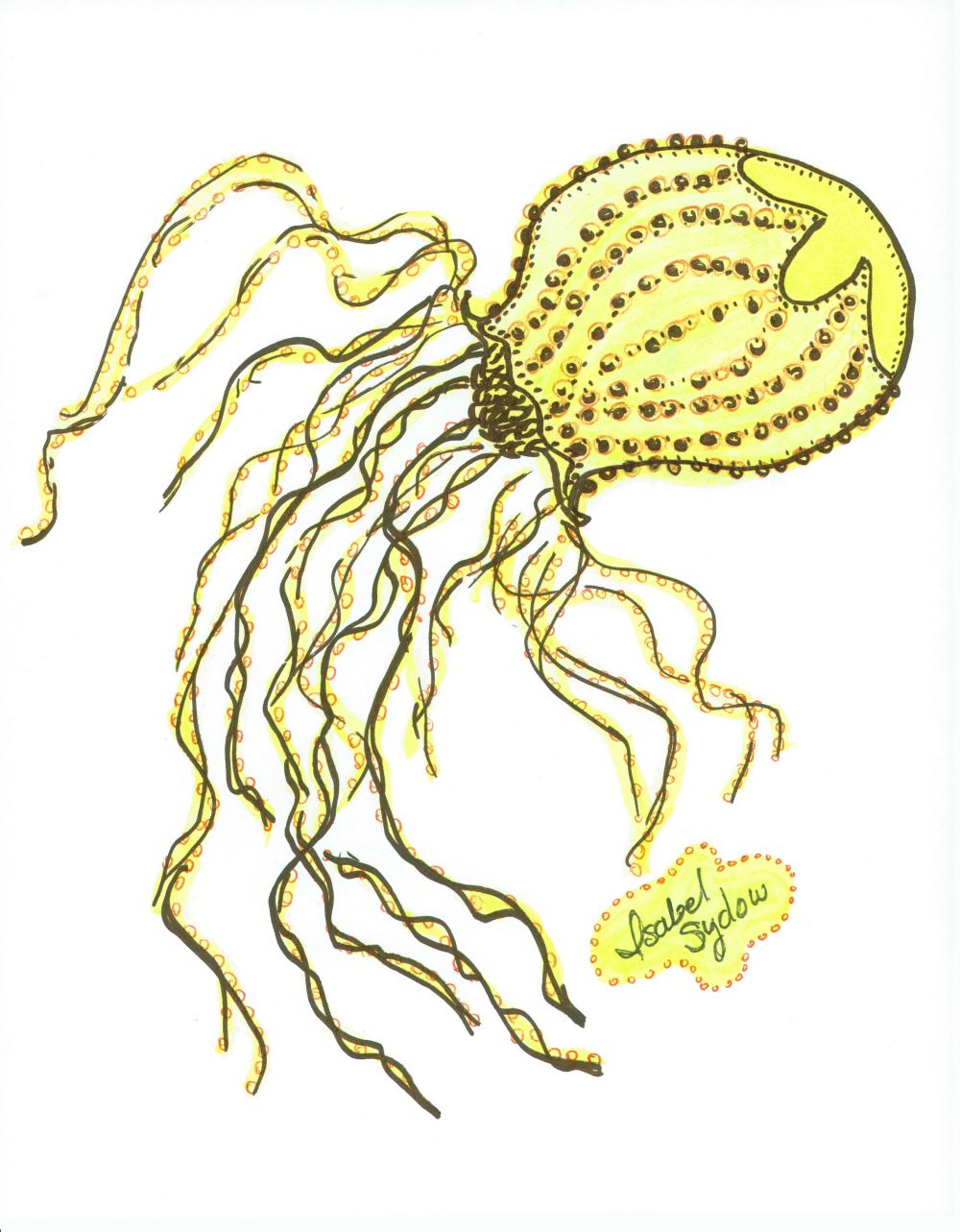 Jelly Fish Bulbous Yellow
