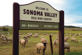 """Entrance to the wine country section of Sonoma Valley is depicted with a sign in St. Francis vineyard located in Kennwod. Sign reads """"Welcome to Sonoma Valley eal Wine Country, 100 plus wineries and historic plaza"""""""