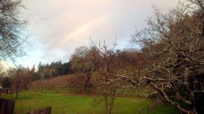 The Big and Juicy Grape is an Airbnb Vacation Guesthouse located in a rural residential area neighboring plots with chickens, goats and grapes. View from the Blue Room;, a rainbow was captured.